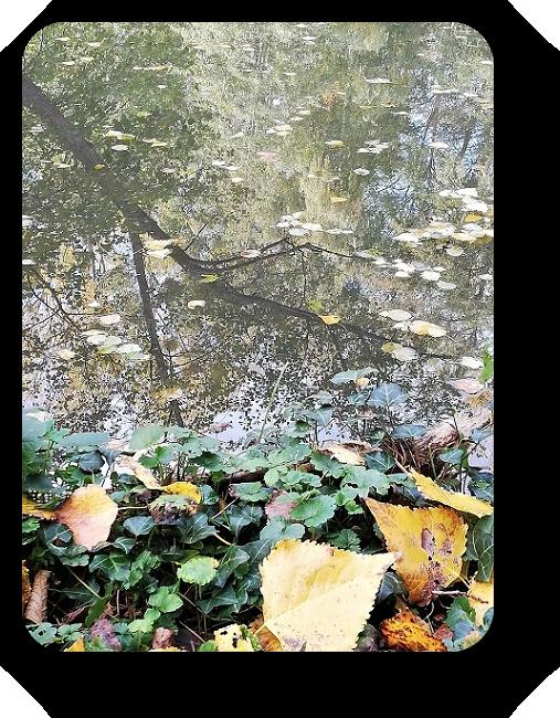 Краски осени во Франции 76_7610