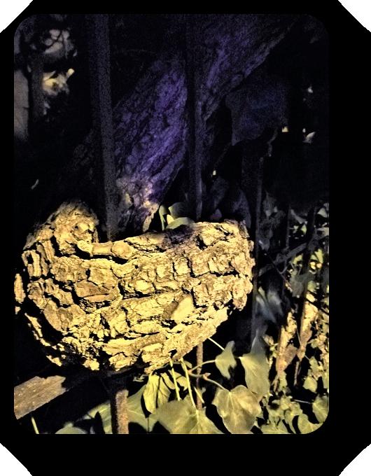 Таинственность ночи (фото) 81_8112