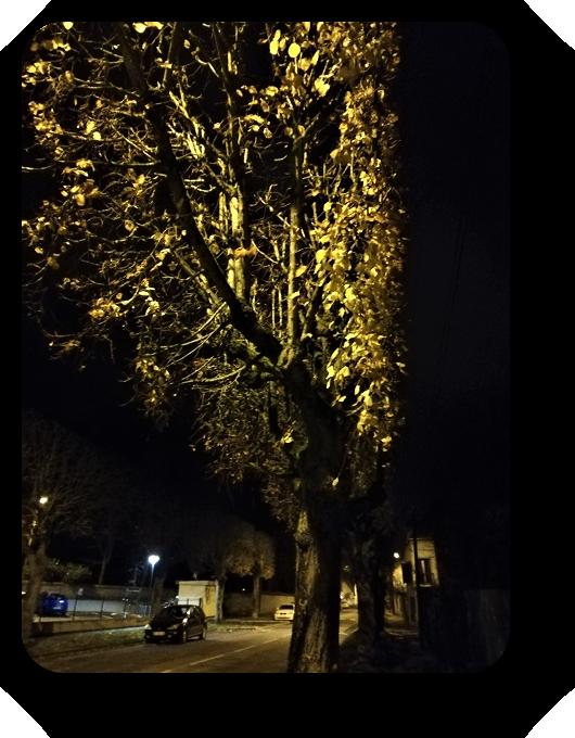 Таинственность ночи (фото) 83_8312