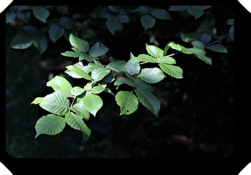 Умиротворяющая сила природы (фото) 8_820