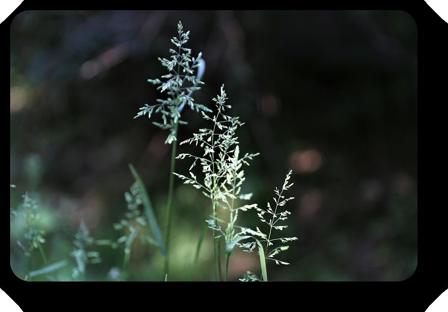 Умиротворяющая сила природы (фото) 9_922