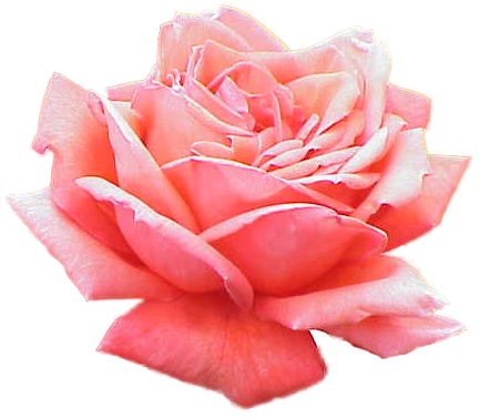 Tarot symbols - Rose Extrac10