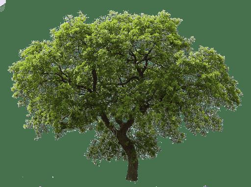Гороскоп Друидов: как определить свое дерево-покровитель Unname10