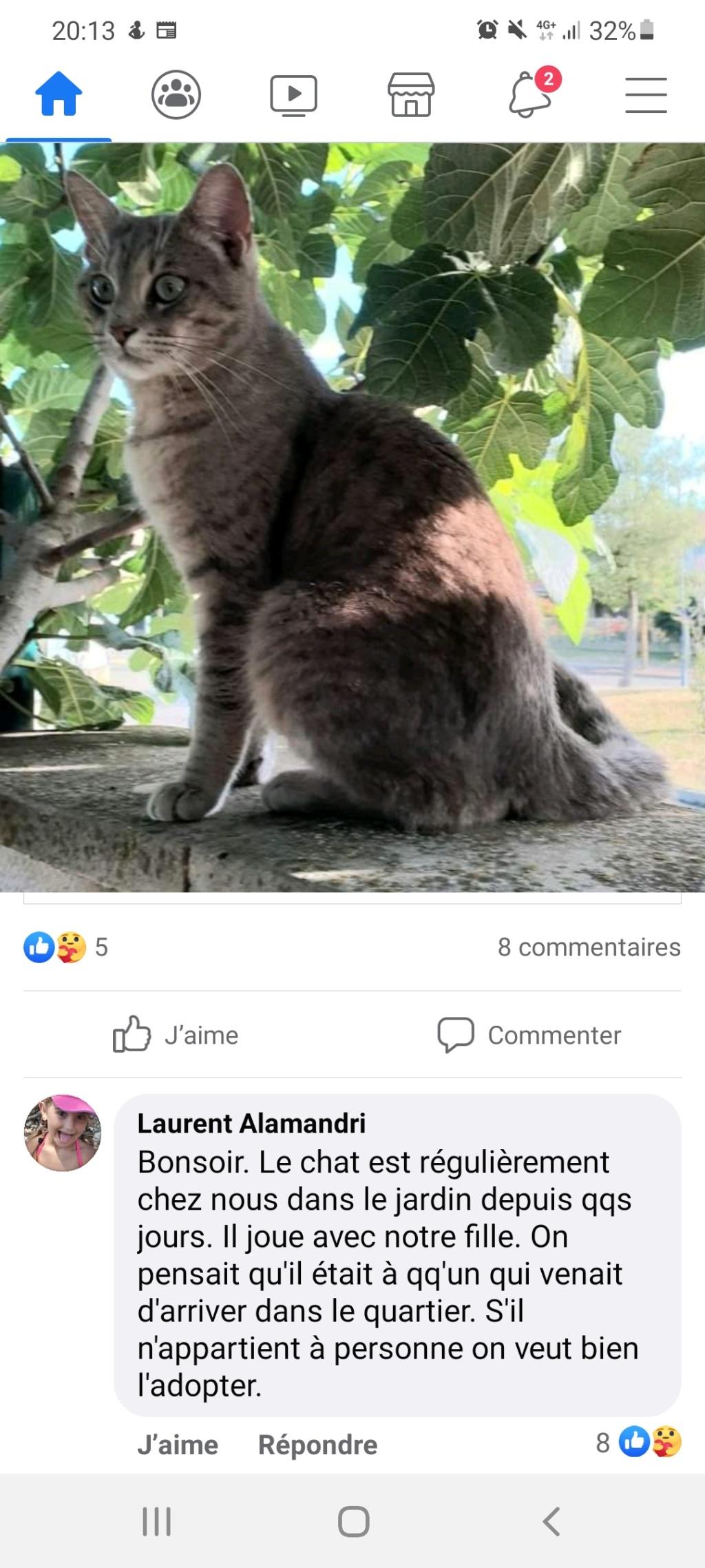 Trouvé chat gris tigré - allée Henriette Moriame à Colomiers Screen12