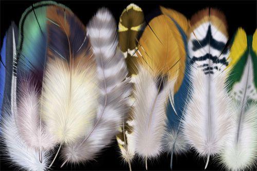 Приметы о перьях птиц Pero_p10