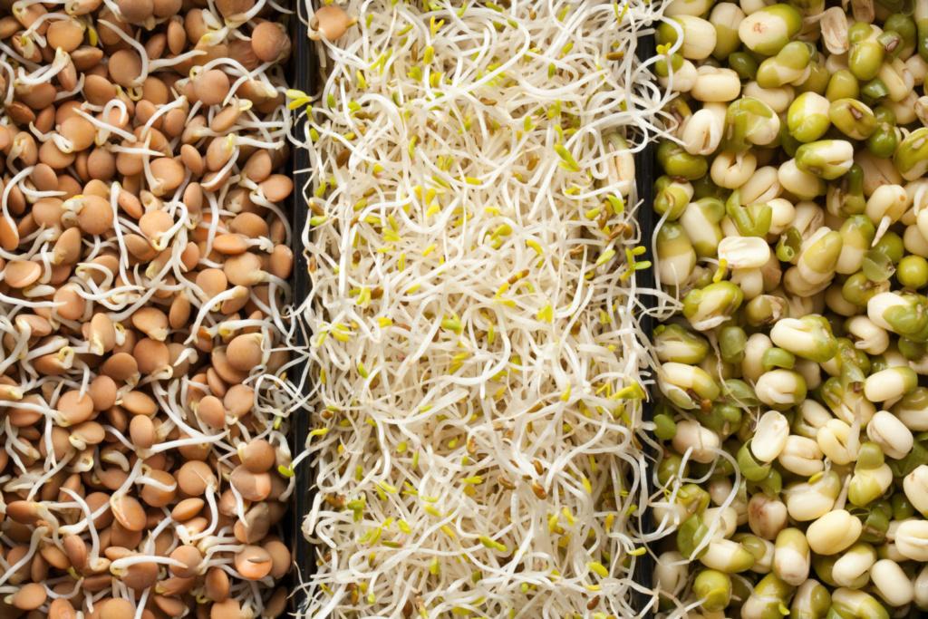 Как проращивать семена и зерна Zerna10