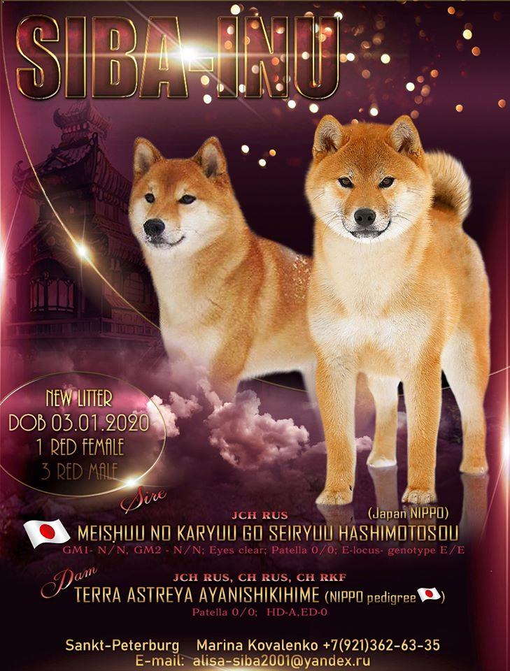 СПБ мальчики от красивой пары MEISHUU NO KARYUU GO SEIRYUU HA SHIMOTOSOU&TERRA ASTREYA AYANISHIKIHIME 83104210