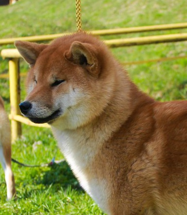 Красивая пара крови Япония. MEISHUU NO MASATORA GO SEIRYUU HASHIMOTOSOU & GINKOUHIME _ls3bm10