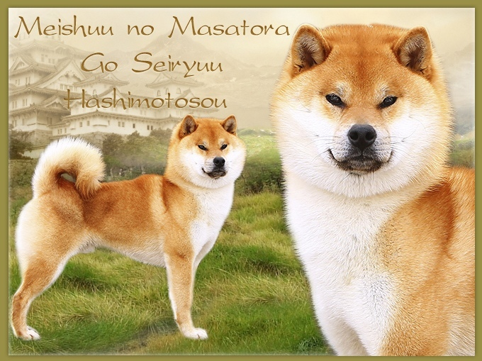 Красивая пара крови Япония. MEISHUU NO MASATORA GO SEIRYUU HASHIMOTOSOU & GINKOUHIME Bomppe10