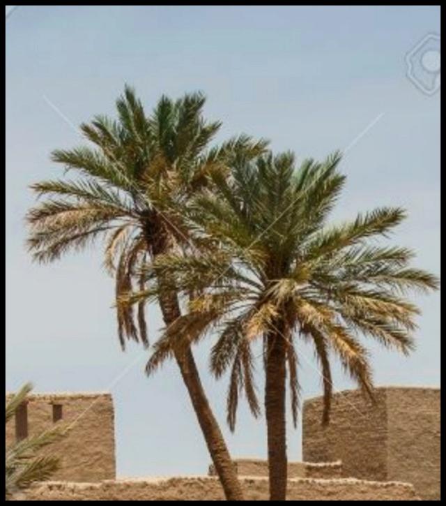 Pas à pas - La confection d'un palmier 1/72e A10