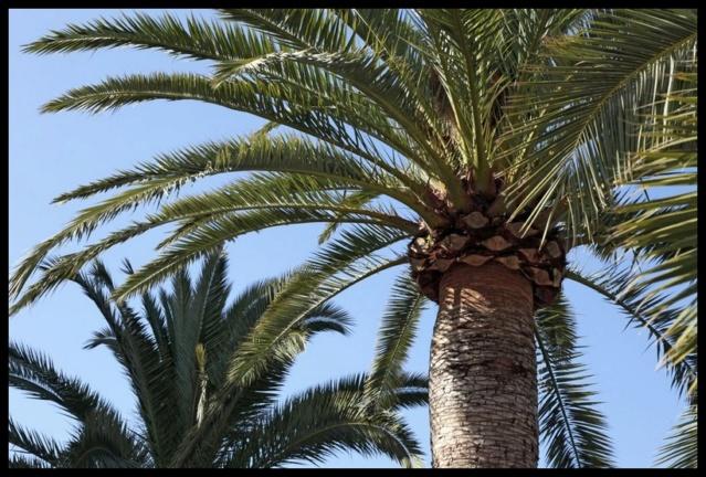 Pas à pas - La confection d'un palmier 1/72e B10