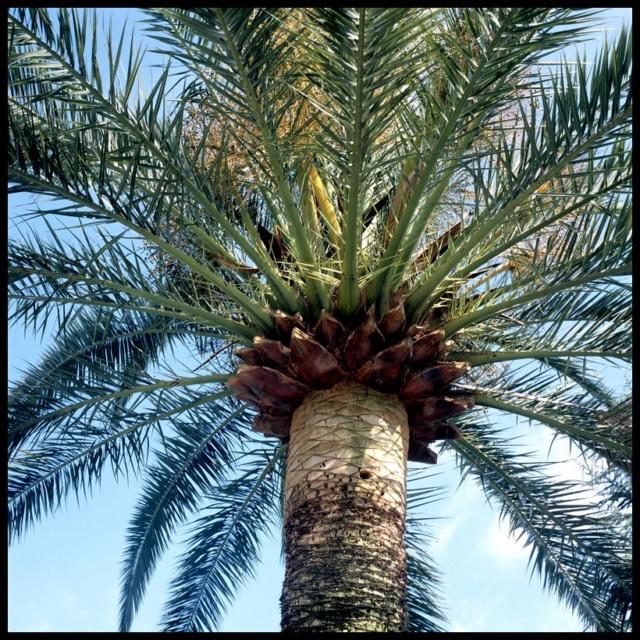 Pas à pas - La confection d'un palmier 1/72e C10