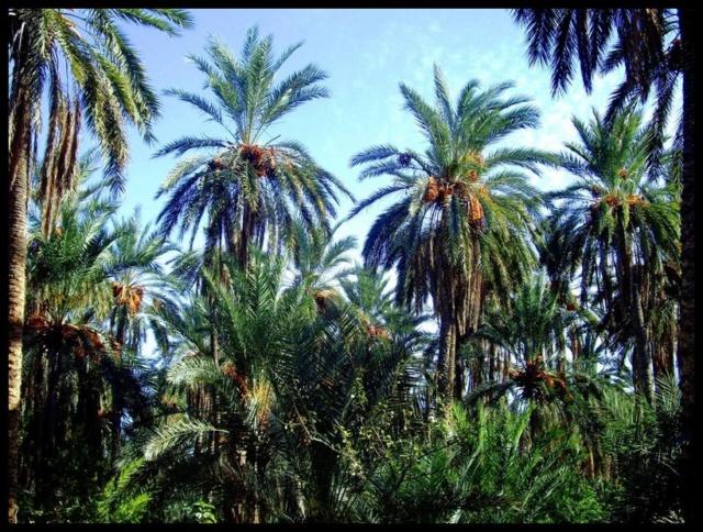 Pas à pas - La confection d'un palmier 1/72e D10