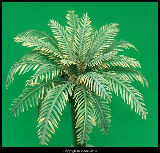 Pas à pas - La confection d'un palmier 1/72e Smarts36