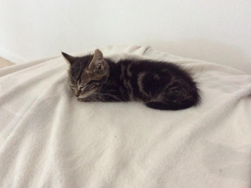 Cheyna petite chatone 8fa74710