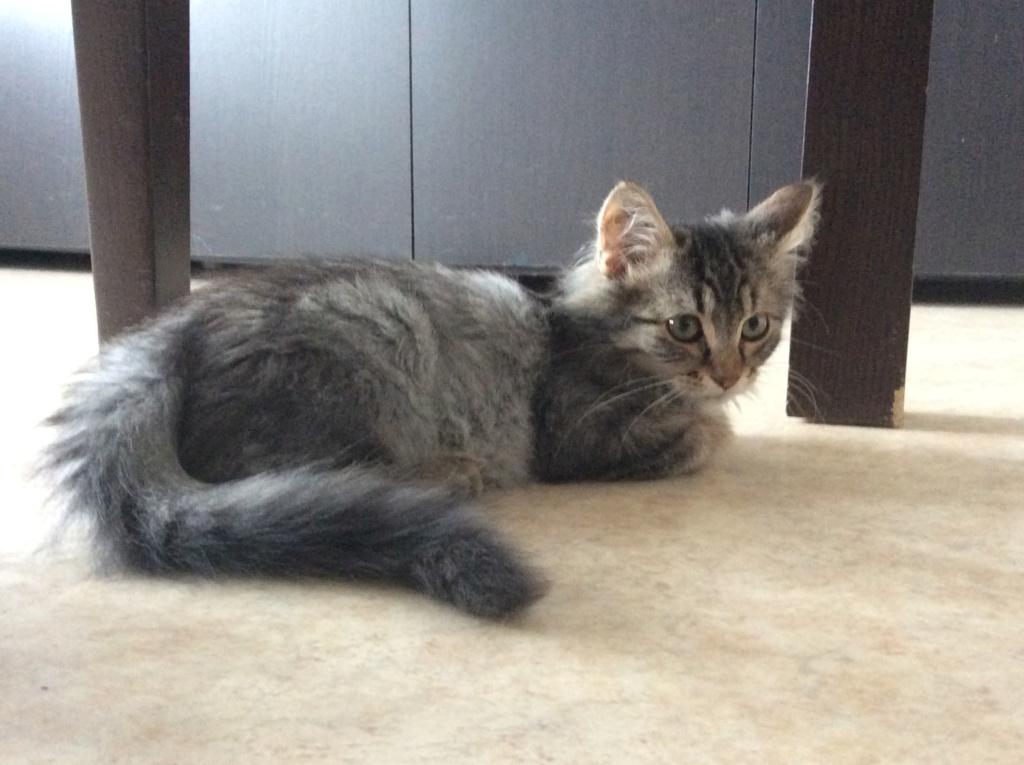 Hooper jeune chaton 9157eb10