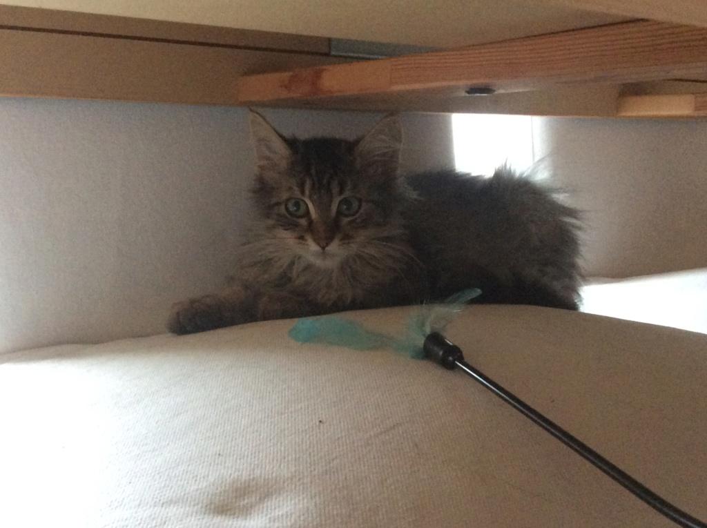 Hooper jeune chaton 95043610