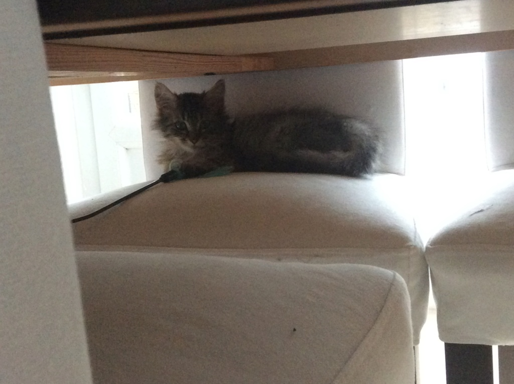 Hooper jeune chaton F8e24710