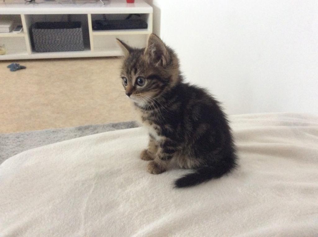 Cheyna petite chatone Fad5e610