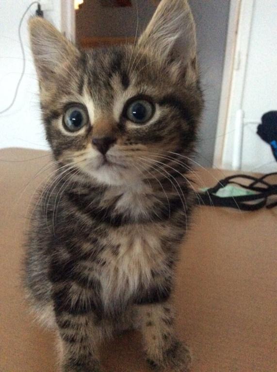 Cheyna petite chatone Img_0711