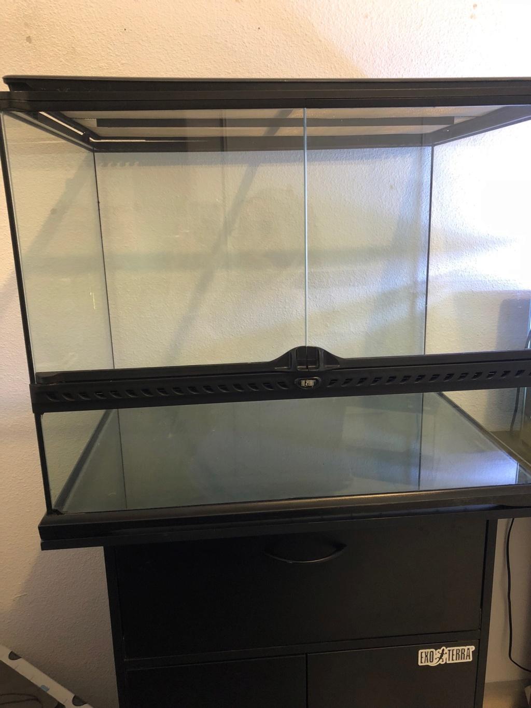 Débuter un terrarium pour un gecko léopard 44519410