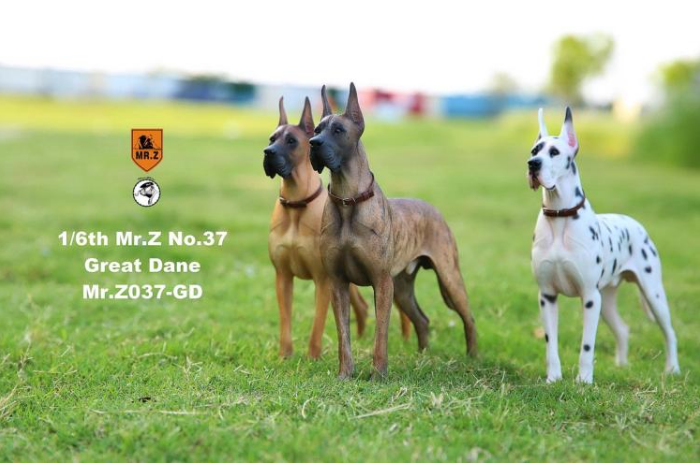 NEW PRODUCT: Mr.Z: simulation animal 37th-1/6 ratio German Great Dane German Great Dane - full set of 6 colors Sd10