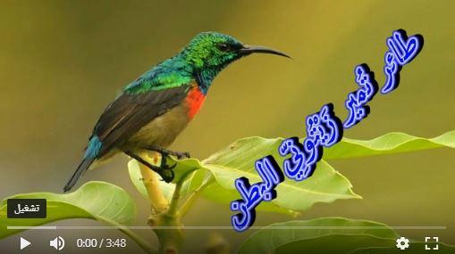 عالم الطبيعة world of nature - البوابة** Aoa10