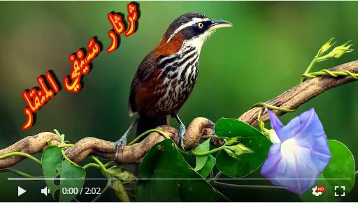 عالم الطبيعة world of nature - البوابة** Aoa12