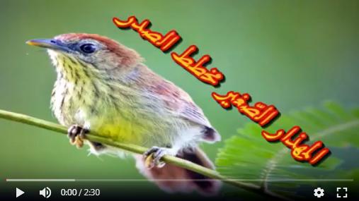 عالم الطبيعة world of nature - البوابة** Aoa49