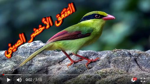 عالم الطبيعة world of nature - البوابة** Aoa57