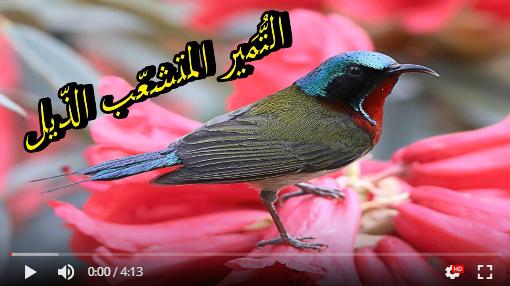 عالم الطبيعة world of nature - البوابة** Aoa61