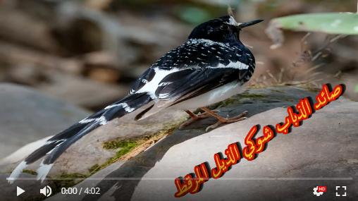 عالم الطبيعة world of nature - البوابة** Aoa63