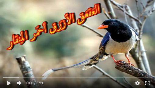 عالم الطبيعة world of nature - البوابة** Aoa64