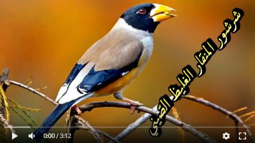 عالم الطبيعة world of nature - البوابة** Aoa65