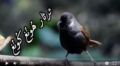 عالم الطبيعة world of nature - البوابة** Aoa69