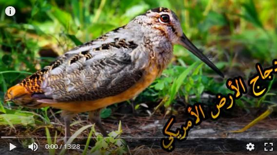 عالم الطبيعة world of nature - البوابة** Oaoa_o12