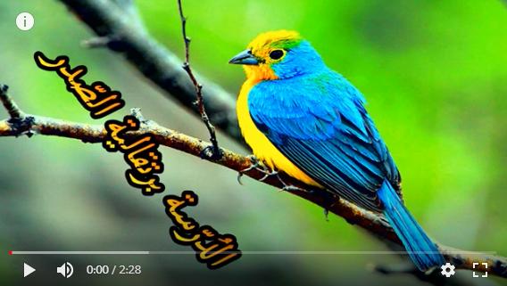 عالم الطبيعة world of nature - البوابة** Oaoa_o13
