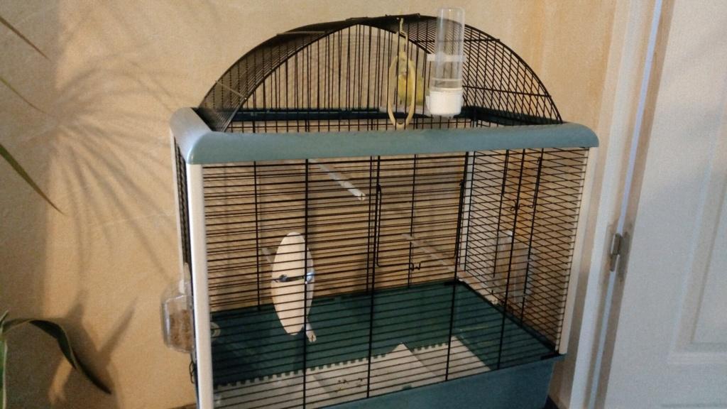 Changement de Cage HELP 49938510