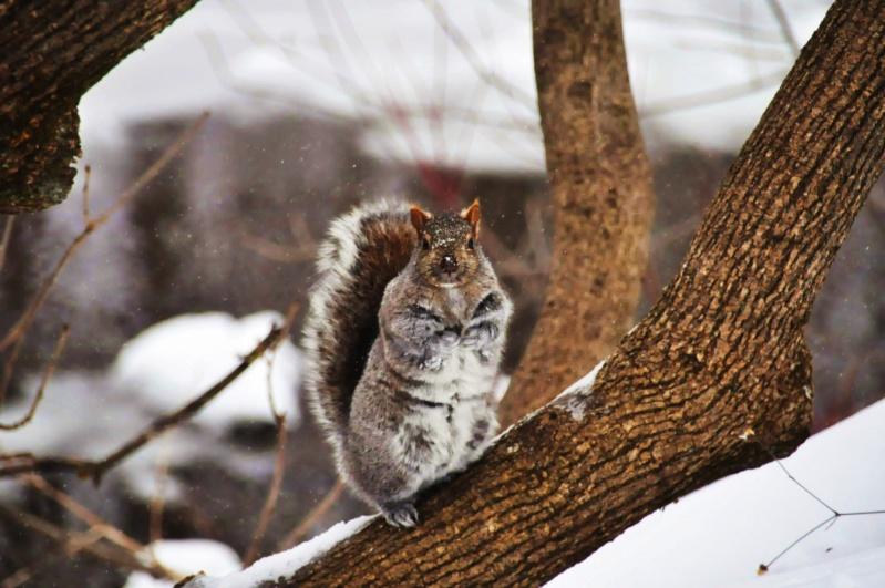 Écureuil-blanc...eu...gris Dsc_0210