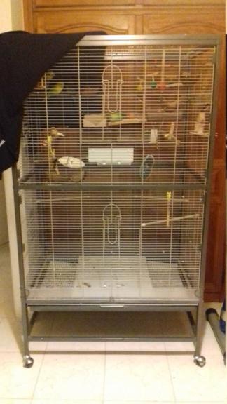 Comportement d'une de mes perruches femelles 20200110