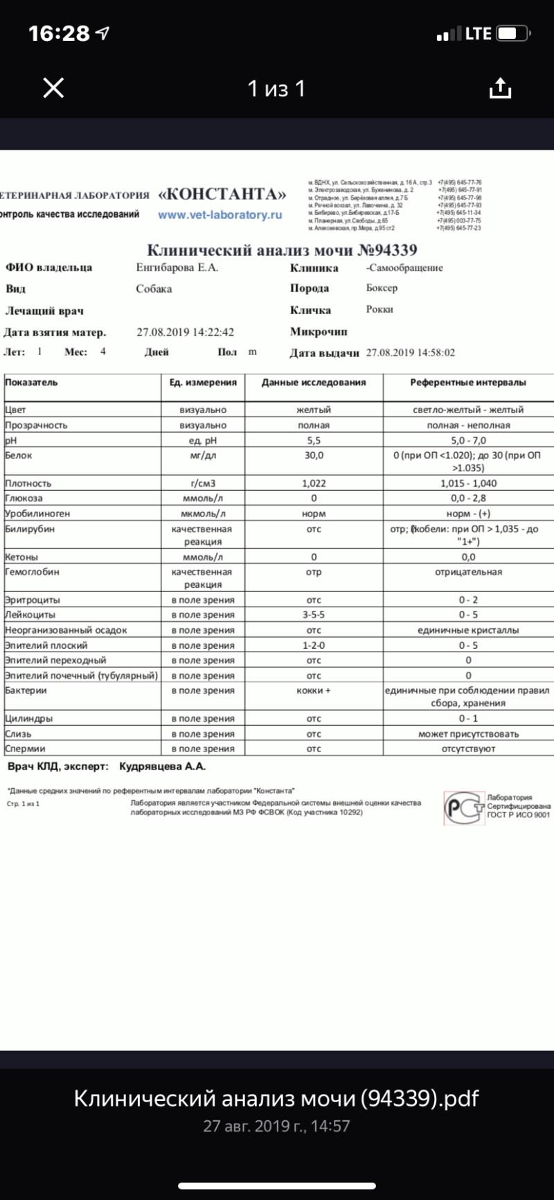 Москва, Ленд Грейп Шеридан, кобель, 24.04.2018 15669110