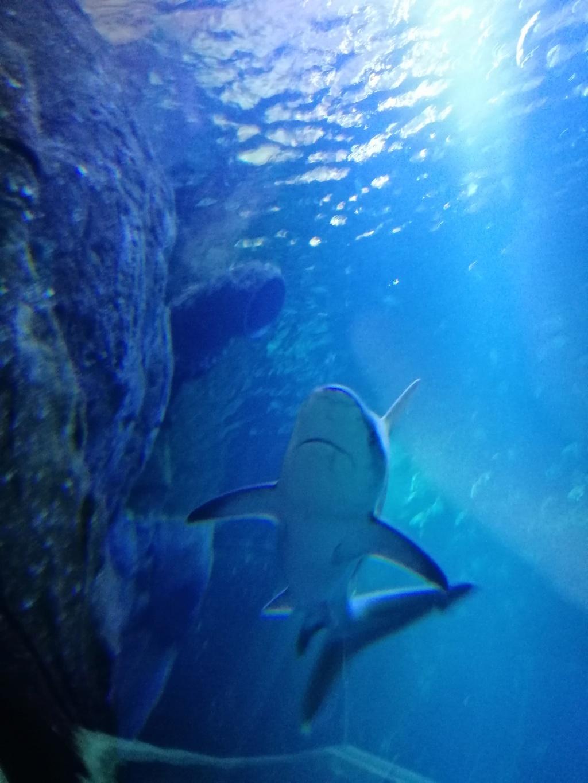 Visite de Nausicaa à Boulogne sur mer Img_2038