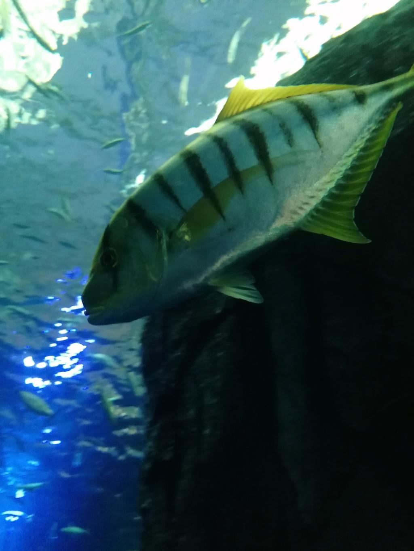 Visite de Nausicaa à Boulogne sur mer Img_2053