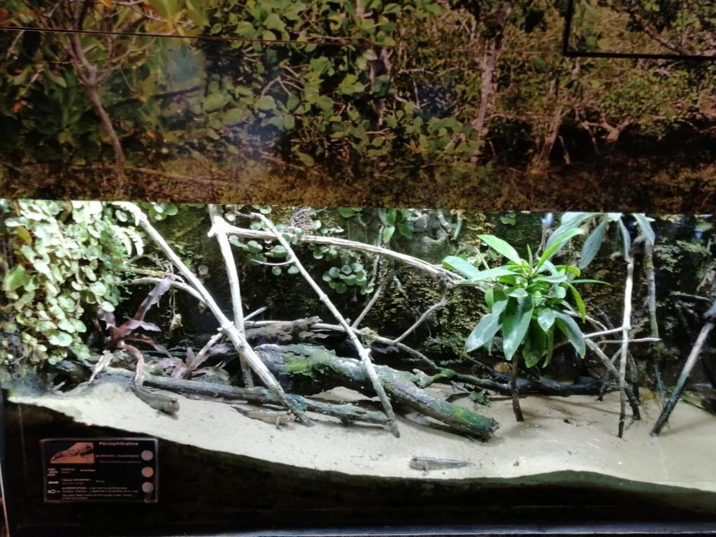 Visite de Nausicaa à Boulogne sur mer Img_2059
