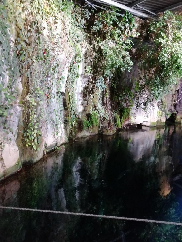 Visite de Nausicaa à Boulogne sur mer Img_2061