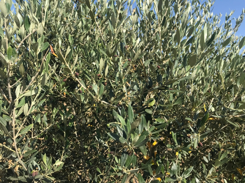 cosecha 2019-20 - Página 2 Img_1712