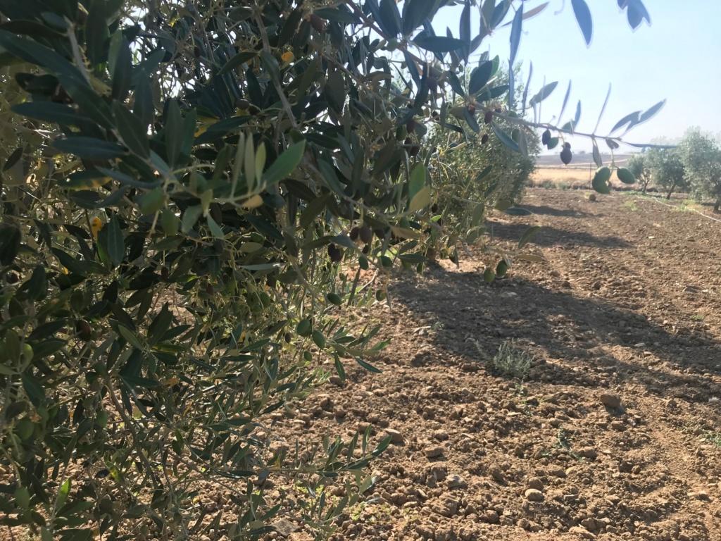 cosecha 2019-20 - Página 2 Img_1713