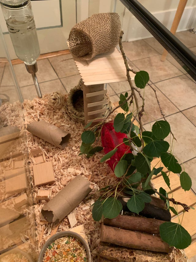 Added some vertical play space to Opal and Sybil's cage! 1x0gqb10