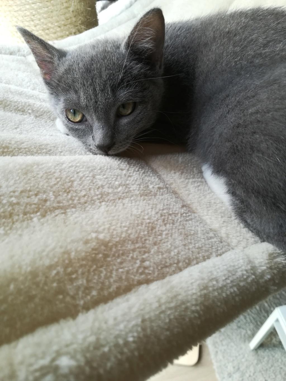Pixie, femelle type européen grise et blanche, estimée 8 juin 2019 - Page 4 Img_2039