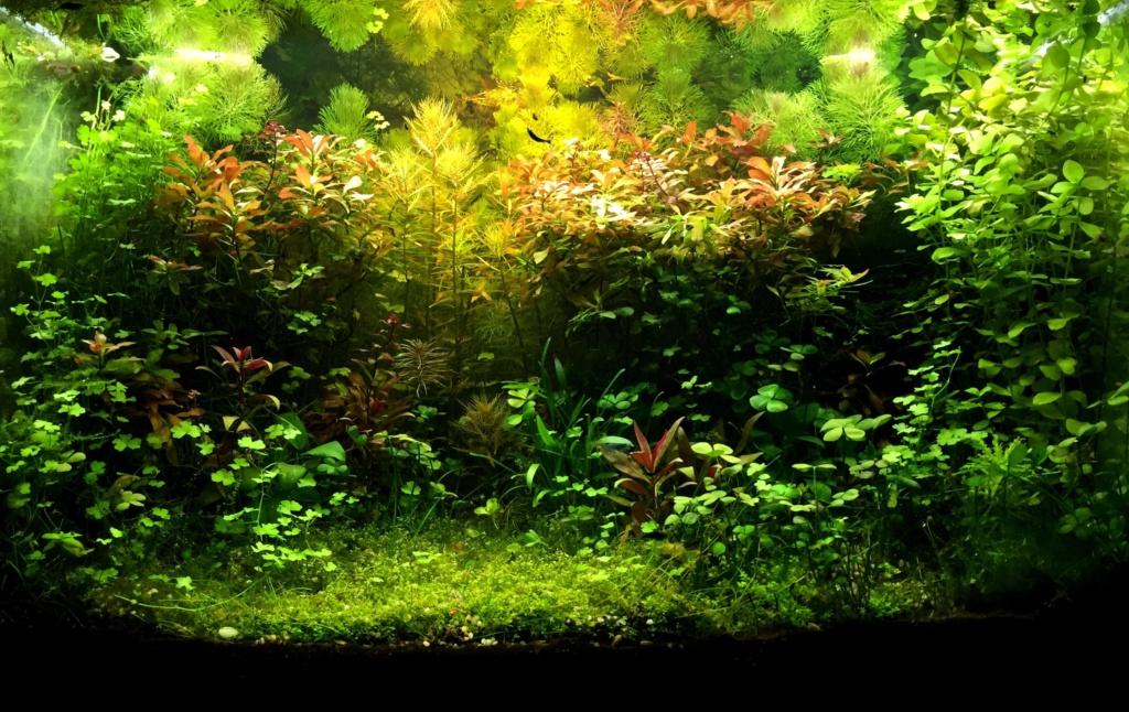 Mettre des photos de votre bac - Page 4 Aquast11